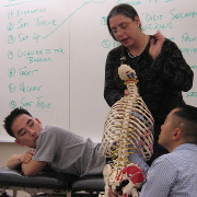Manipulative medicine demo with skeleton