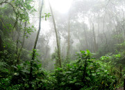 A picture of part of the Amazon Rainforest.