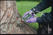 Image of tool used to maintain tree health at MSU.