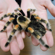 An image of hands containing a spider.