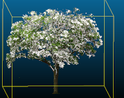 A computer generated image of a tree.