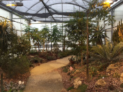 A picture of the inside of the MSU Herbarium and Teaching Conservatory with a pathway in a greenhouse with many plants.