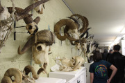 Image of the MSU Museum vertebrae collection.