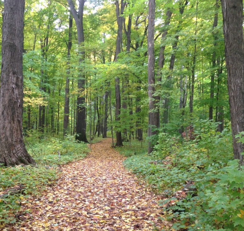 A path in Baker Woodlot with trees and leaves.